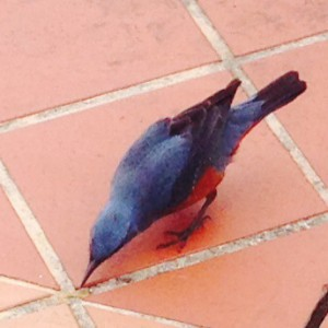 青い鳥-2